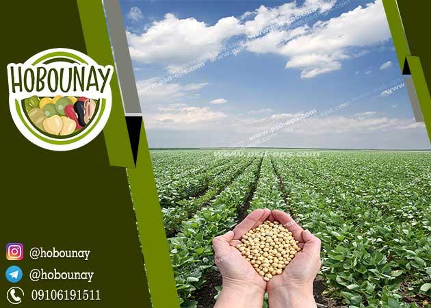 قیمت عمده حبوبات از کشاورز