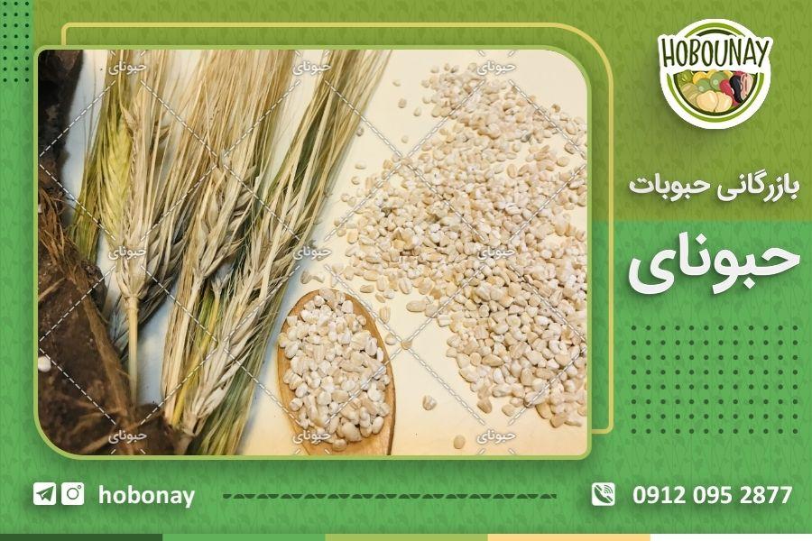 کاشت و تولید حبوبات و انتقال آن به فروشگاه های ایرانی